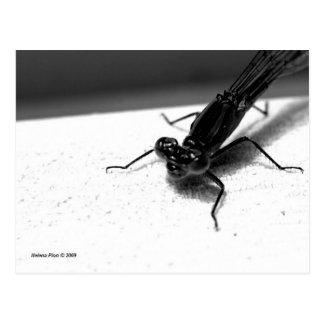 Postal macra de la libélula de B&W