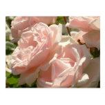 Postal magnífica de los rosas