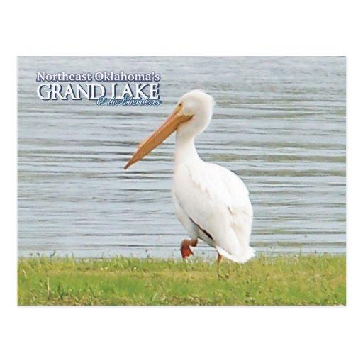 Postal magnífica pelican2 de Oklahoma del lago