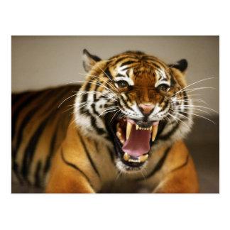 Postal malaya del tigre #2