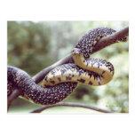Postal manchada de rey serpiente