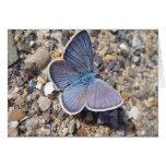 Postal mariposa azul: Bläuling, en blanco Tarjeta