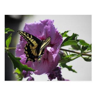 Postal - mariposa de Swallowtail en el flor