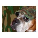 Postal militar del perro del boxeador