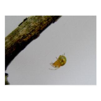 Postal minúscula de la araña del tejedor del orbe
