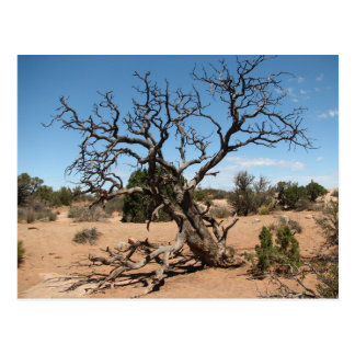 Postal muerta del árbol del enebro de Utah