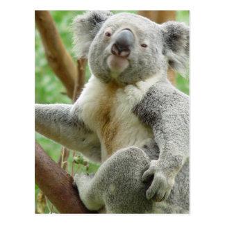 Postal mullida de la koala