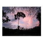 Postal: Mundo la Florida de la puesta del sol