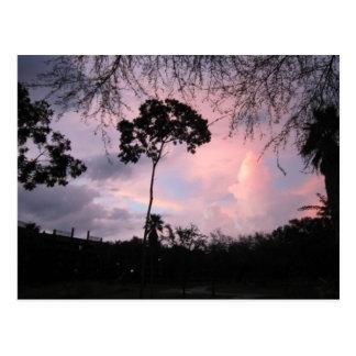 Postal: Mundo la Florida de la puesta del sol Tarjetas Postales