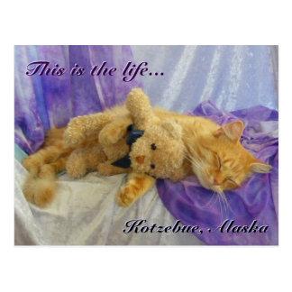 Postal Napping del gato