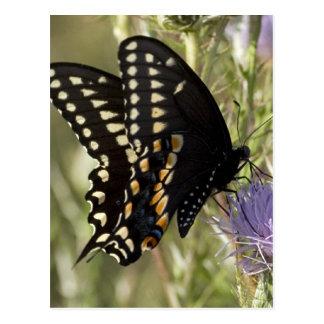 Postal negra de la mariposa de Swallowtail