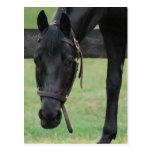 Postal negra del caballo