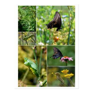 Postal negra del ciclo vital de la mariposa de