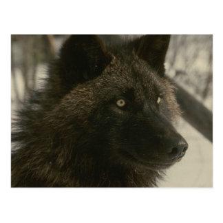 Postal negra del lobo