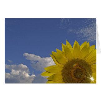 postal neutral rayo solar tarjetón