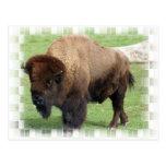 Postal norteamericana del bisonte