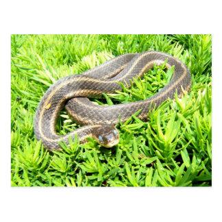 Postal observada azul del ~ de la serpiente
