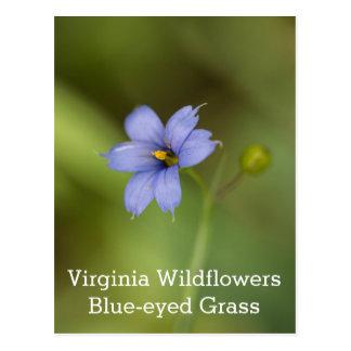 Postal observada azul del Wildflower de Virginia