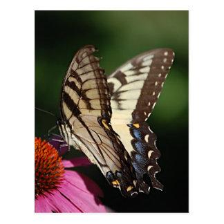 Postal occidental de Swallowtail del tigre
