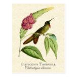 Postal olivácea del arte del colibrí de Thornbill