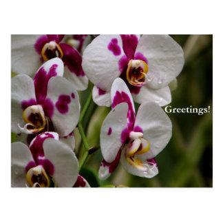 Postal - orquídea