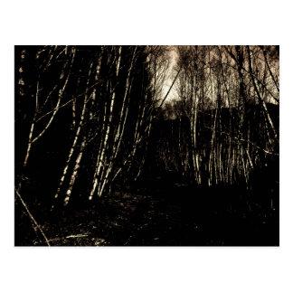 Postal oscurecida fantasmagórica del bosque
