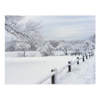 Postal pegajosa del ~ de la nieve 7