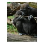 Postal pensativa del gorila