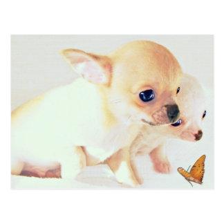 Postal pequenita dulce de los perritos