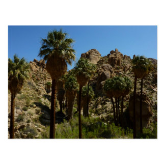 Postal perdida del oasis de las palmas