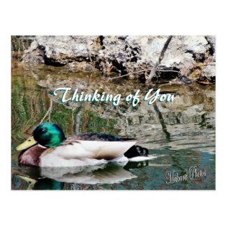 Postal-personalizar de las reflexiones del pato tarjetas postales