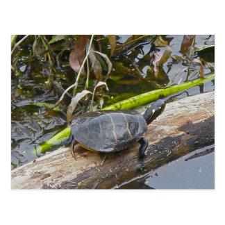 Postal pintada de la tortuga