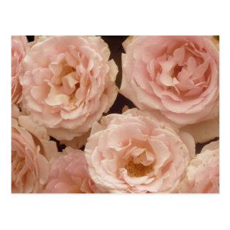 Postal preciosa de los rosas