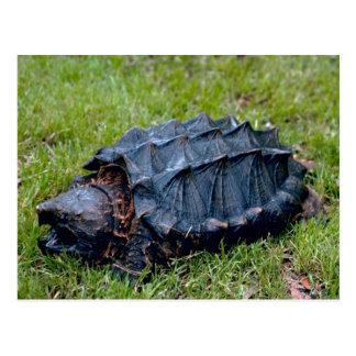 Postal prehistórica viva de la tortuga