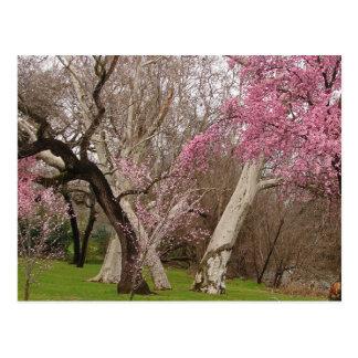 POSTAL - primavera en Chico, CA