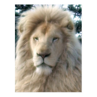 Postal principal del león