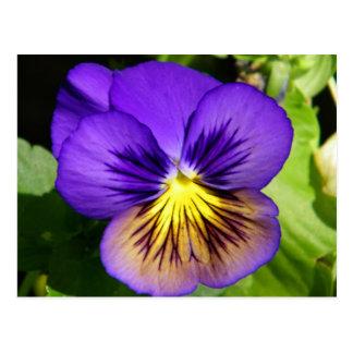 Postal púrpura bonita del pensamiento