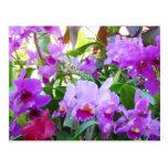Postal púrpura de la flor de los lirios
