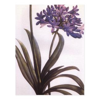 Postal púrpura de la flor de Redoute del vintage