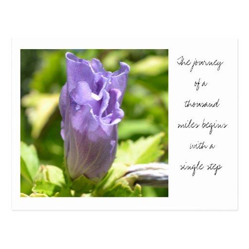 Postal púrpura de la flor del zen espiritual