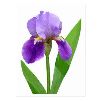 Postal púrpura del iris