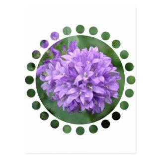 Postal púrpura del Phlox