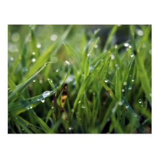 Postal que cultiva un huerto de la hierba del desc