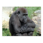 Postal que se sienta de Gorila