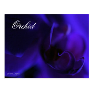 Postal real de la orquídea azul, fotografía