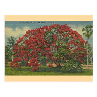Postal real del árbol de la Florida Poinciana del