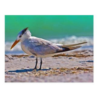 Postal real del pájaro de la golondrina de mar