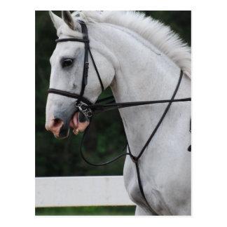 Postal recogida del caballo blanco