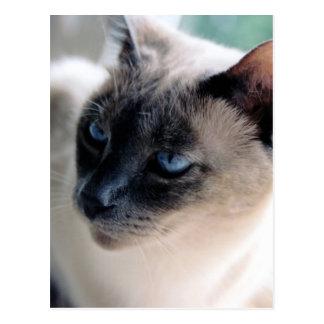 Postal reservada del gato siamés