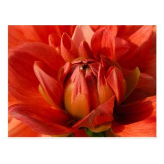 Postal roja de la flor
